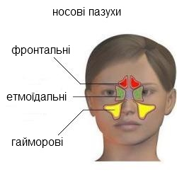 носові пазухи