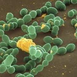 ознаки стрептококової інфекції