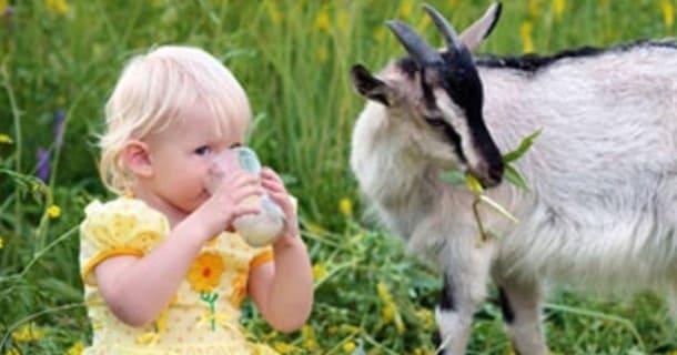 користь козячого молока